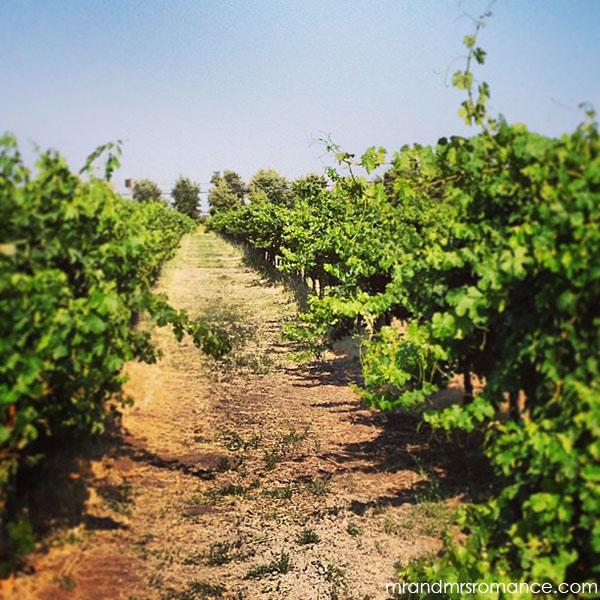 Mr and Mrs Romance - San Francisco Sonoma wineries