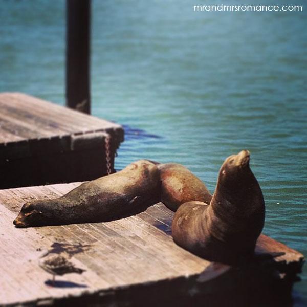 Mr and Mrs Romance - San Francisco sea lions