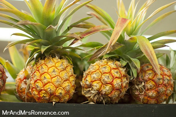 Mr & Mrs Romance - Food - 9 Katoomba pineapples