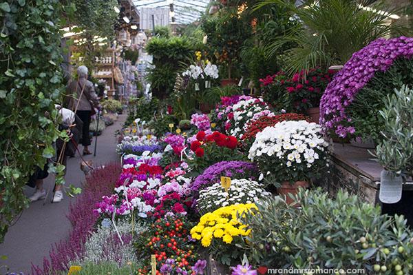 Paris flower markets - Ile de la Cite
