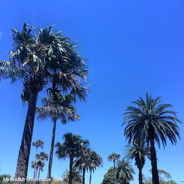Mr & Mrs Romance - Insta diary - 16HR2 Sydney palm trees