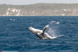 Bucket List: the best whale watching in Hervey Bay, Queensland