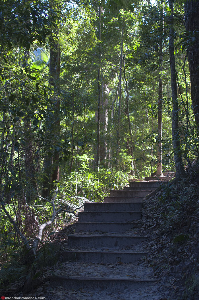 Mr and Mrs Romance - What to do on Fraser Island - 4x4 tours rainforest walk