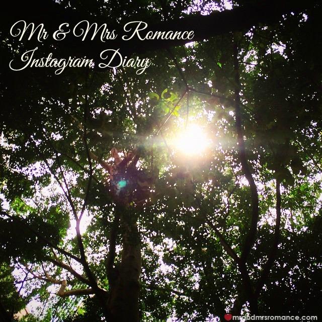 Mr & Mrs Romance - Insta Diary - 1 light through the trees