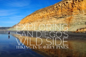 Exploring San Diego's wild side – hiking in Torrey Pines