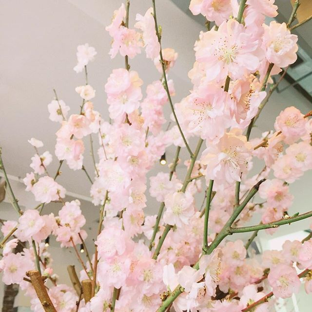 Mr & Mrs Romance - Insta Diary - 1a blossoms at Paramount
