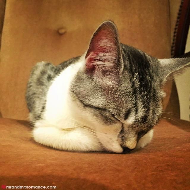 Mr & Mrs Romance - Insta Diary - 6 sleepy cat