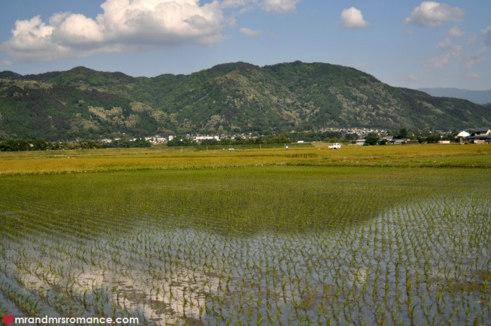 Mr & Mrs Romance - Japan escape - 19 paddy fields and mountains