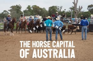 How to make the most out of Scone Horse Festival, NSW