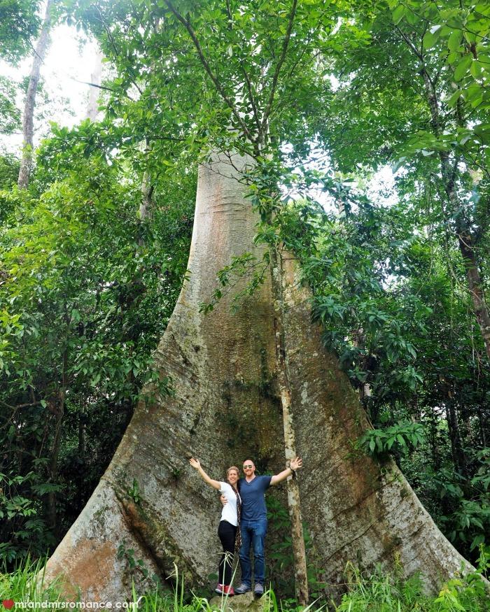 Mr & Mrs Romance - IG Edition Sabah - 12 the big trees begin Danum Valley