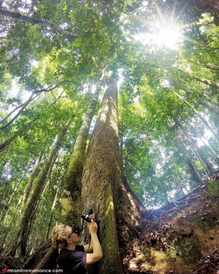 Mr & Mrs Romance - IG Edition Sabah - 15 trees Danum