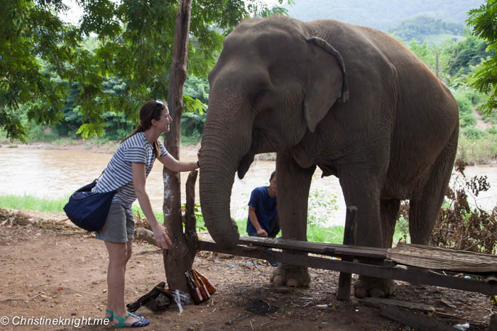 Christine Knight - Elephant Nature Park Chiang Mai