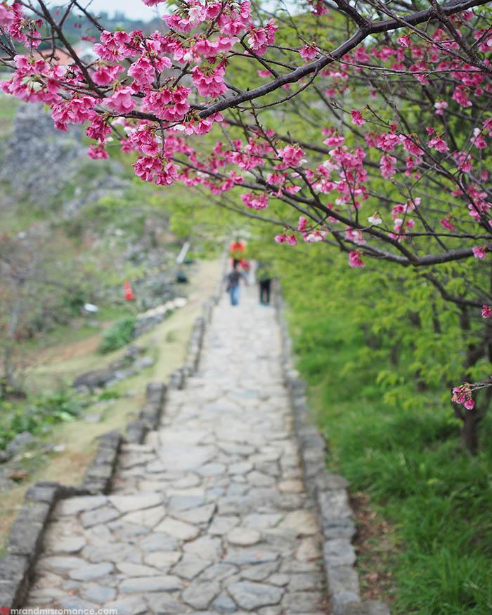 Mr & Mrs Romance - unusual things Okinawa - 15 Sakura