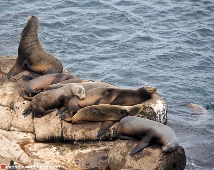 San Diego sea lions La Jolla