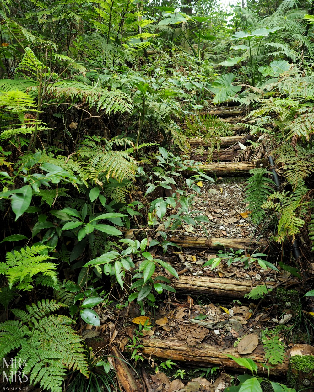 Power Spots, Okinawa, Japan - Mr & Mrs Romance - Hiji Waterfall stairs and jungle