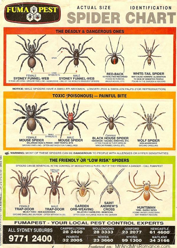 spider sydney scary hairy phobia