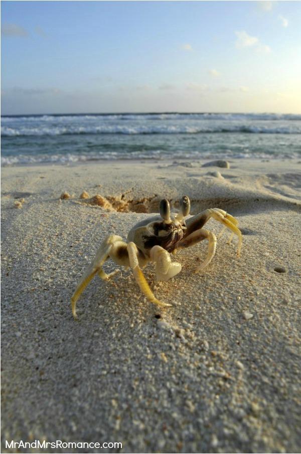 Mr and Mrs Romance, Vanuatu, Pacific island, port vila, beach, holiday, vacation