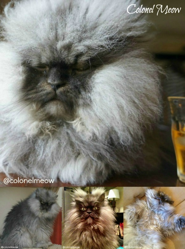 Colonel Meow collage