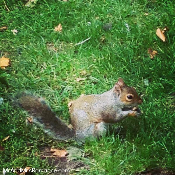 Mr & Mrs Romance - European Romance London - 16 MM11 St James Park squirrel