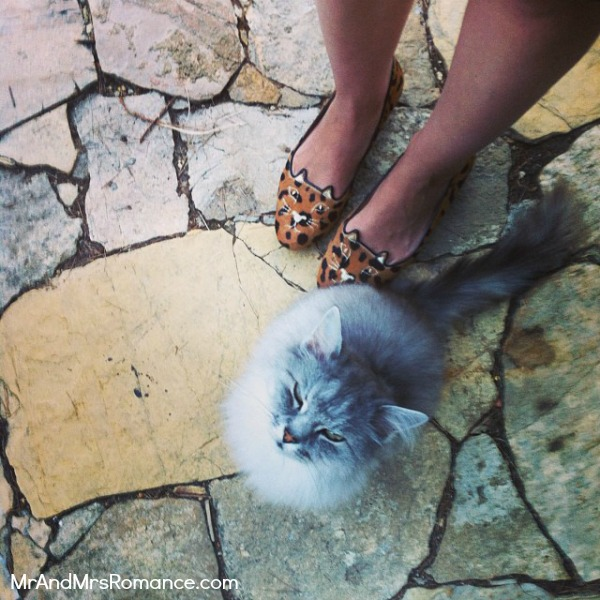 Mr & Mrs Romance - Instagram diary S France - 03 HR 3 Mario the cat at our digs in Provence