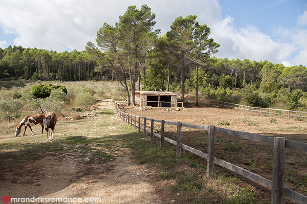 Horses at Lorgues Provence