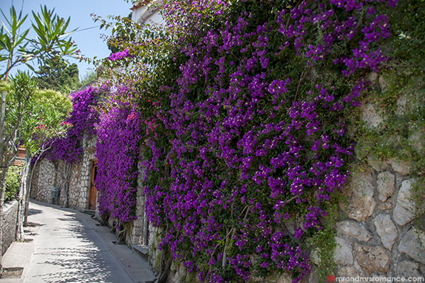 Mr and Mrs Romance - floral paths in Capri