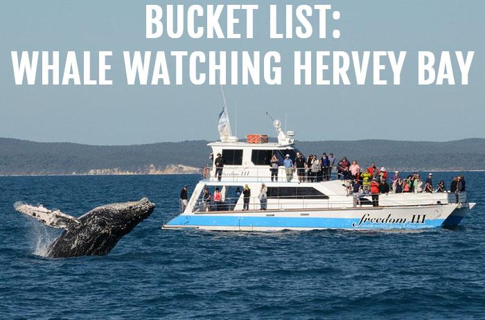 BUCKET LIST - Freedom III Hervey Bay whale watching