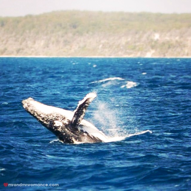 Mr & Mrs Romance - Insta Diary - 4 whale watching on the Fraser Coast