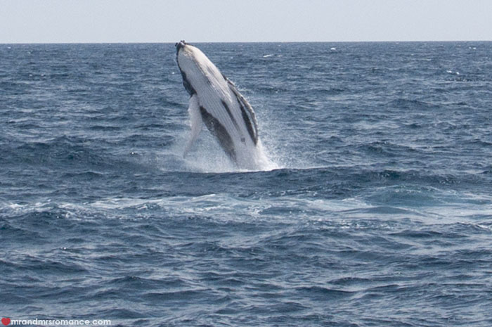 Mr and Mrs Romance - Whale watching - Hervey Bay Fraser Island 2