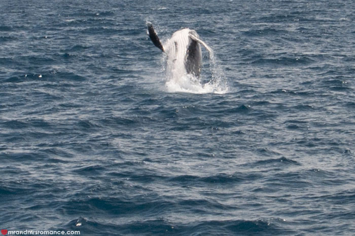 Mr and Mrs Romance - Whale watching - Hervey Bay Fraser Island 4