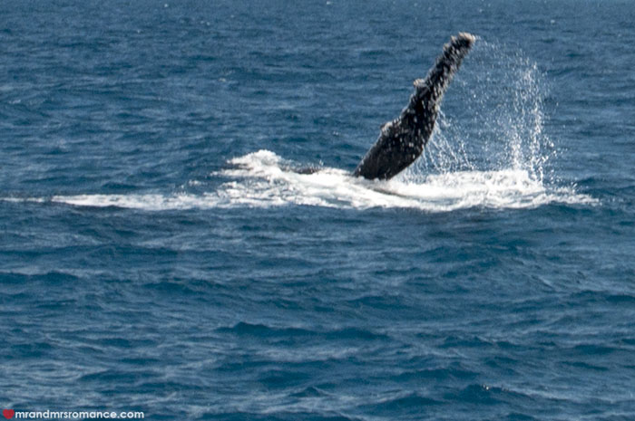 Mr and Mrs Romance - Whale watching - Hervey Bay Fraser Island 6