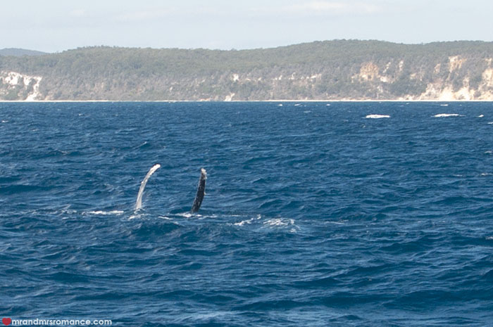 Mr and Mrs Romance - Whale watching - Hervey Bay Fraser Island 8