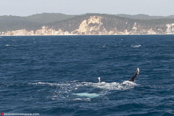 Mr and Mrs Romance - Whale watching - Hervey Bay Fraser Island 9