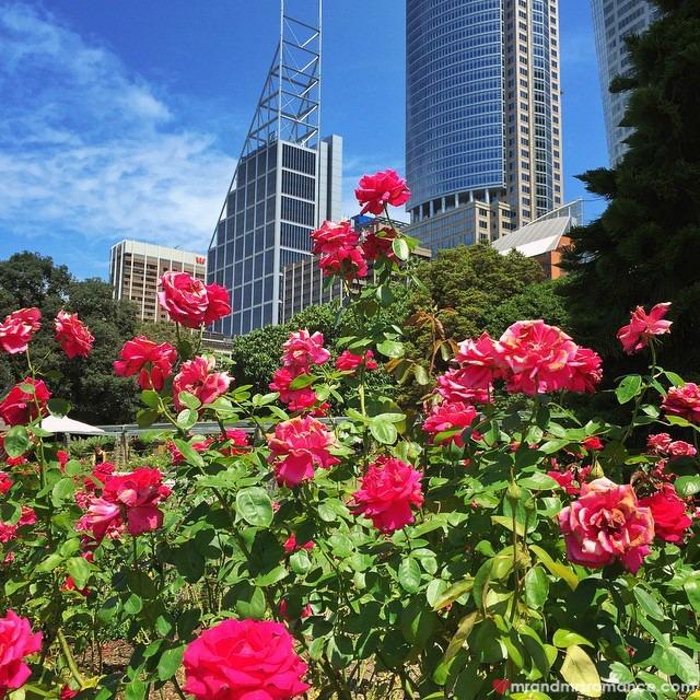 Mr & Mrs Romance - Insta Diary - 5aCB2 Sydney Botanic Gardens