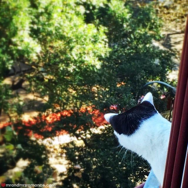 Mr & Mrs Romance - Insta Diary - 5 cat