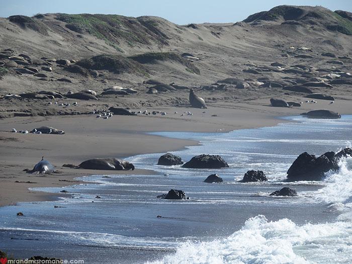 Mr-and-Mrs-Romance-Highway-1-Roadtrip-Elephant-seal-beach.jpg