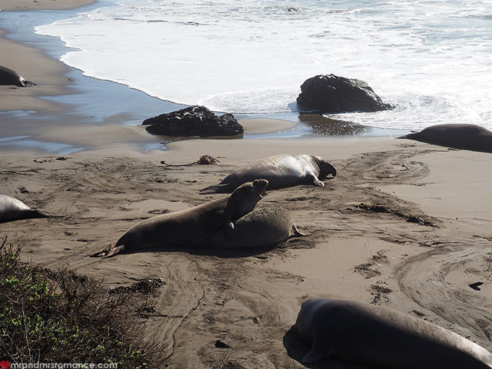 Mr-and-Mrs-Romance-Highway-1-Roadtrip-Elephant-seals.jpg