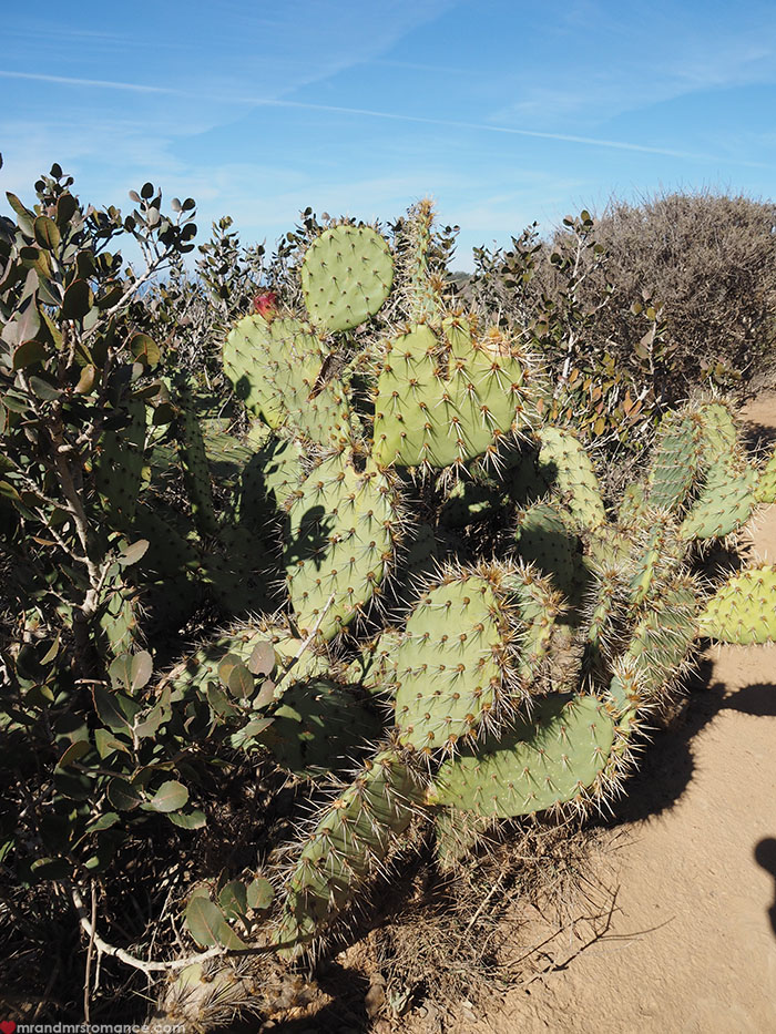 Mr-and-Mrs-Romance-Hiking-in-Torrey-Pines-San-Diego-7-cactus.jpg