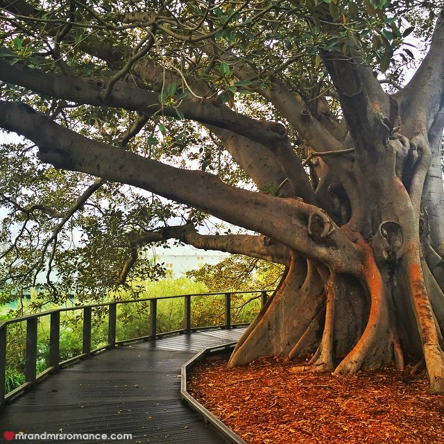 Mr & Mrs Romance - Insta Diary - 2 Botanic Gardens tree
