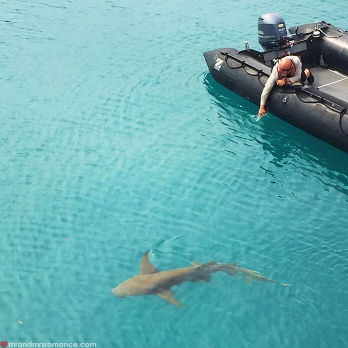 Mr & Mrs Romance - Insta Diary - 2 shark!