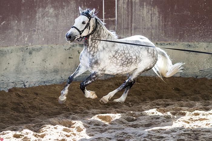 Mr & Mrs Romance - Longest Ride - training horse