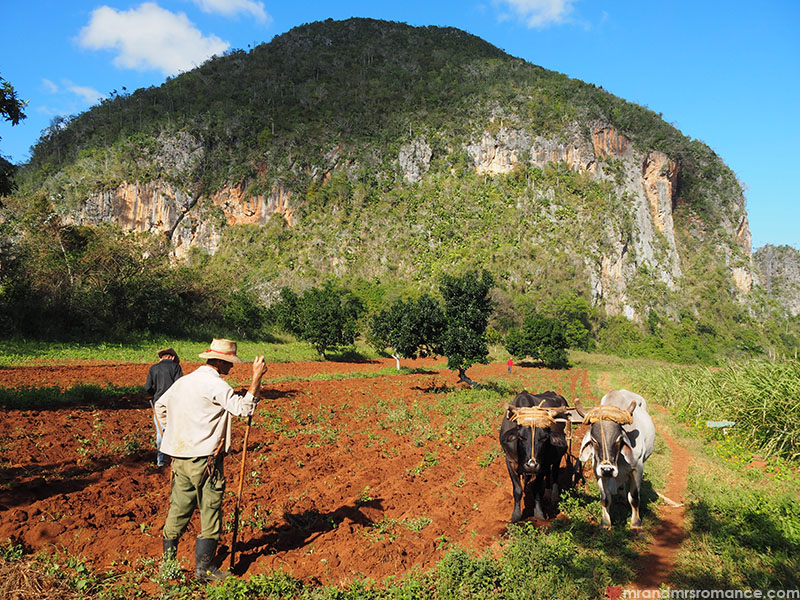 Mr & Mrs Romance - where to go in Cuba - Vinales tobacco farms