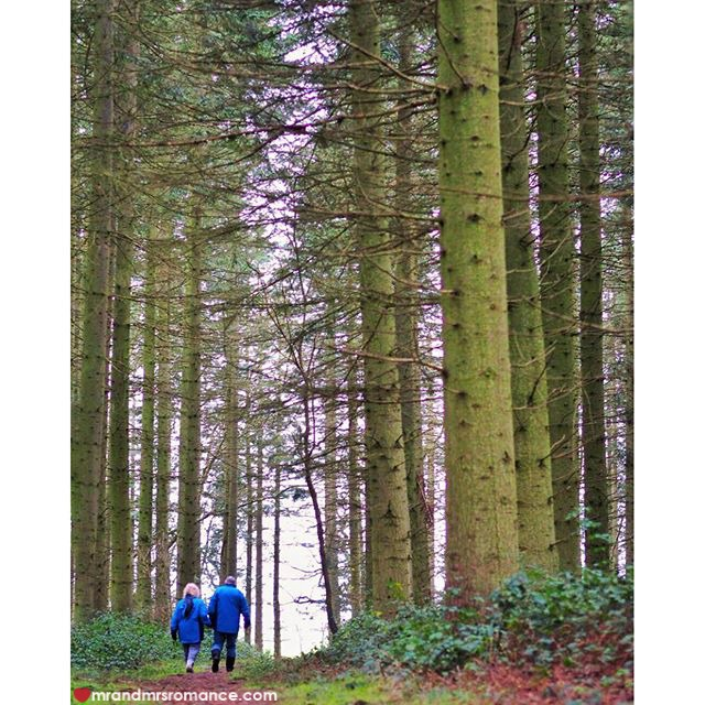 Mr & Mrs Romance - Insta Diary - 3 Englsih forest walk