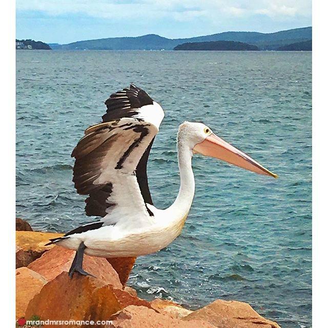 Mr & Mrs Romance - Insta Diary - 4 Pelican!