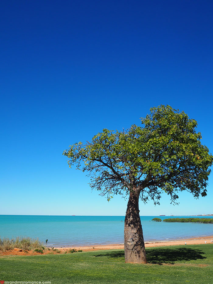 Where to stay in Broome, WA - Bali Hai Resort & Spa - boab tree
