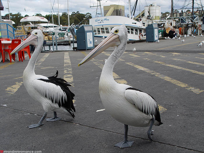 Fishmarket Patrol