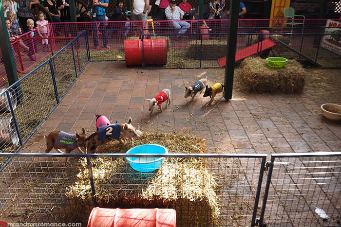 Mr & Mrs Romance – Scone Horse Festival - Pig  racing at the Royat Hotel Motel