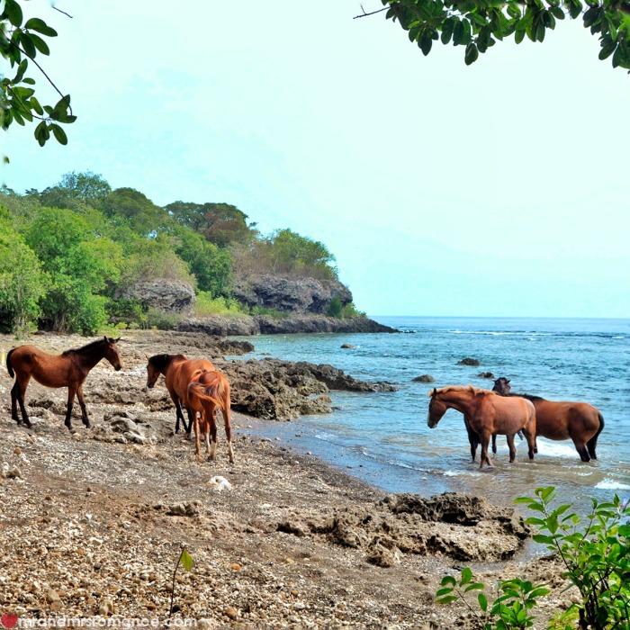 Mr & Mrs Romance - Insta Diary - 52 Tanna horses