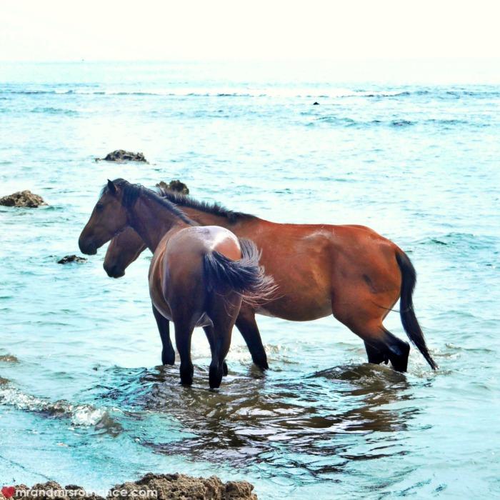 Mr & Mrs Romance - Insta Diary - 53 Tanna horses