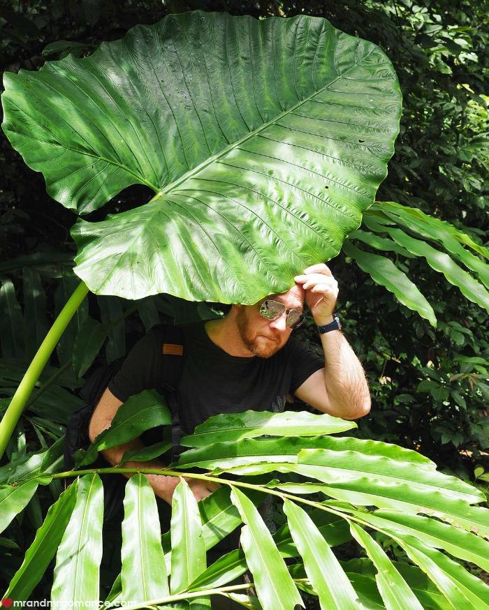 Mr & Mrs Romance - IG Edition Sabah - 17 elephant palm Danum Valley
